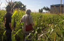 Laberinto de maíz en tiempos de Covid