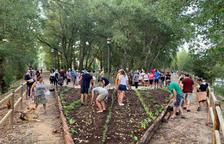 Senterada impulsa el primer jardí comestible