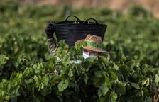 El freno en grandes mercados alarma al sector del vino