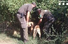 Denunciados en Tremp por haber abandonado a sus perros