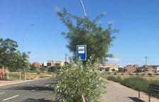 Buscan a un chófer tras derribar un árbol con su coche en Alcarràs