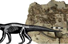 Un cocodril a Coll de Nargó