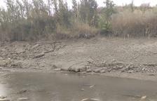 Alertan de peces sin rescatar en el canal de Seròs
