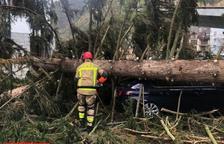 Un árbol provoca daños en varios coches en Les