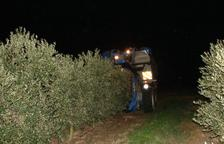 Alerten del veto de recollir olives amb maquinària durant la nit