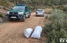 Denunciados por recolectar piñas sin permiso en Os de Balaguer