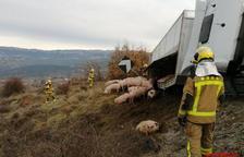 Vuelca un camión cargado de cerdos en Isona