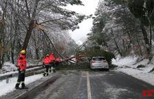 Un vehicle queda atrapat per la caiguda d'un arbre a Castell de Mur