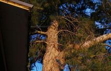 Revisen pins pel vent a Albatàrrec i Alcoletge