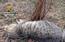 Investiguen la mort de diversos gats amb llaços trampa a Tarragona