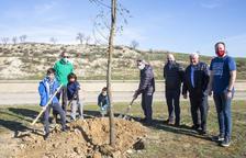 Planten vint arbres al canal a Castellserà