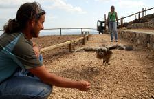 SOS del zoològic d'Odèn