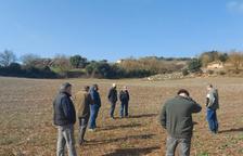 Exigen la caza intensiva de corzos para evitar daños a la agricultura en Lleida