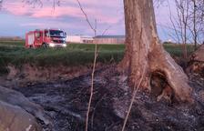 Cae un árbol y 20 sufren daños por una quema de rastrojos