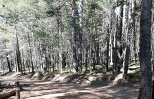 Denuncien danys de totterrenys al Parc de l'Alt Pirineu