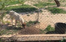 Deixen morir de fam gossos en una finca de les Garrigues