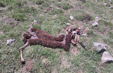 Segon atac de l'os en menys d'una setmana a la zona de Gessa