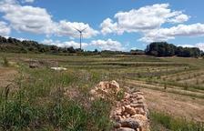 El Garrigues Sud ya dedica más de 75 hectáreas al cultivo de trufa negra