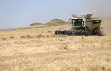En marxa la collita del cereal en una campanya desigual per la sequera
