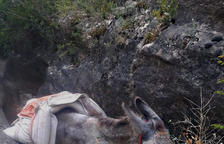 L'amo del burro atrapat va demanar-ne el rescat