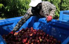 El sector fructícola confia en bons preus aquest estiu