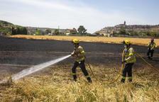 Arde en Cervera una hectárea de vegetación agrícola
