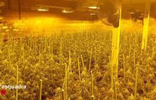 Detienen a un hombre por cultivar 2.790 plantas de marihuana en Camarasa