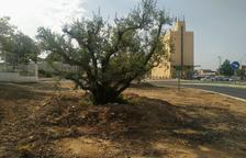 Alcarràs planta 160 arbres repartits pel municipi