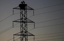 Las cigüeñas han convertido esta torre de tendido eléctrico en su hogar.