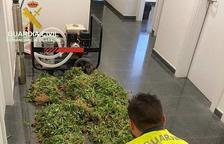 Localitzen 5.700 plantes de marihuana prop del pantà de Santa Anna