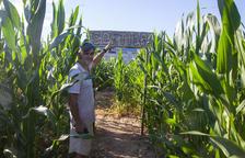 El arpa se adueña del laberinto de maíz
