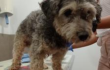 Hallan el perro por el que se ofreció recompensa de 1.000€