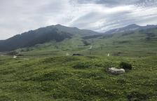 El Valle de Aran pide prudencia a los turistas tras incidentes con vacas