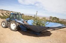 Recolección de pistachos en una finca de la empresa en la zona regable del canal Segarra-Garrigues.