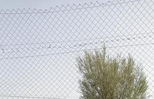 El refugio animalista de Alcoletge denuncia cuatro robos en un año