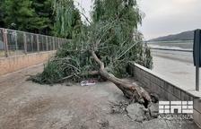 Mequinensa retira arbres dels carrers pel vendaval de l'11