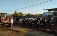 El último ganadero de bovino de leche del Jussà busca nuevas salidas a su producción