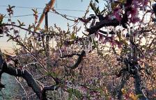 Imagen de esta primavera de frutales cubiertos de hielo gracias al riego por aspersión.