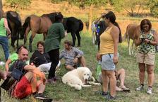 'Refugio' en el pirineo leridano para caballos rescatados de maltratos