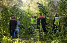 Els Mossos desmantellen al pla de Lleida dos plantacions més de marihuana