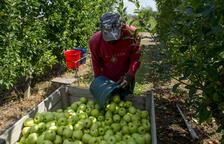 Agricultura quiere centrar la PAC en la 'clase media' de los payeses