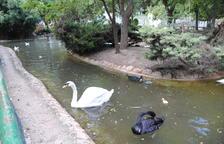 L'ajuntament de Mollerussa desmantella la zona d'ànecs i cignes del parc municipal