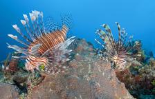 caràcter únic. L'oceà i les seves meravelles submarines donen a les Bahames un caràcter únic amb una barreja de colors verds i blaus, únics a tot el Carib i arreu del món.