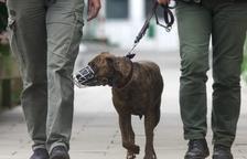 Multa de 636 € en Les Borges por llevar un perro peligroso sin atar