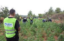 Detinguts després de denunciar un crim en un narcoassalt a les Borges