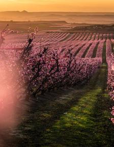 En marxa tot l'any, Fruiturisme ha representat una font de riquesa econòmica i social per al poble.
