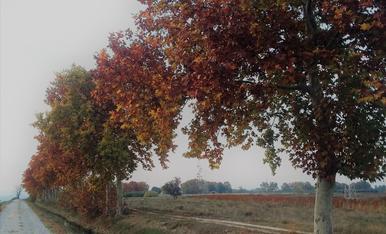 En dies de boira sort en tinc del color que em donen aquets arbres!!