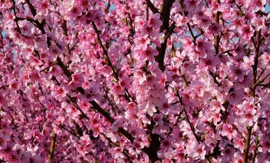 Primavera a Aitona