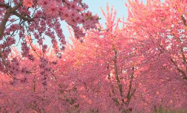 El teu temps, la primavera
