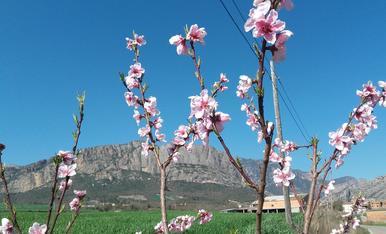 Lesclat de les flors de primavera,Magda Bach